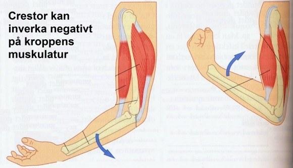 crestor biverkningar muskler